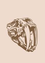 Graphical Vintage Skull Of Saber-toothed Tiger, Paleontology Of Ice Age