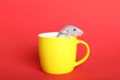 Leinwandbild Motiv Cute small rat in yellow ceramic cup on red background