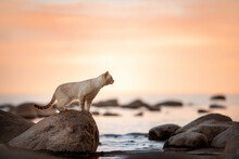 A Tabby Cat Stands On A Rock Against The Backdrop Of A Sea Sunset