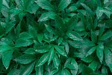 Green Branch Rain Drop Tropical Raindrops Leaf Leaves Droplet