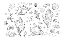 Seashells Vector Set. Hand Drawn Illustration On White Background. Collection Of Realistic Sketches. Various Mollusk Sea Shells Different Forms, Echinus, Sea-urchin, Starfish, Seaweed, Coral, Clam.