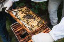Beekeeper Collecting Honey From The Beehive