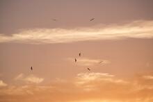 Frigate Birds Sunrise