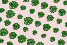 Monstera Leaves On Pink Background