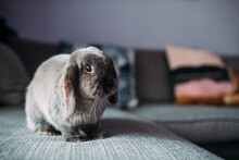 Spotted Rabbit Sitting On Sofa At Home