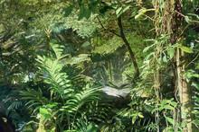 Costa Rica: Rain Forest In Costa Rica