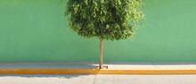 Tree Growth: Growth Tree Background