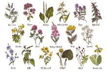Hand Drawn Set Of Medicinal Herbs