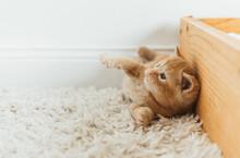 Playful Kittens