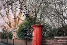 A Post Box Surrounded By Blossom