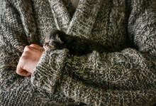 Newborn Kitten In Owner's Arms