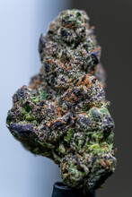 Cannabis Flower Macro - Strain: Sunset Sherbet