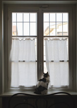 Cat Waiting For The Owner To Come Back Home