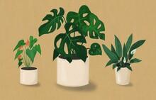 Lush Foliage Houseplants