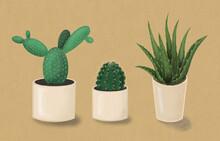 Aloe Vera  And Cactus