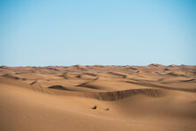 Sand Dunes With A Lone Bush In The Desert Near