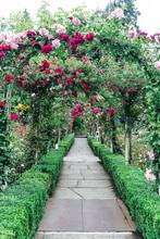 Rose Garden Walkway In Botanical Garden