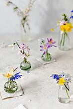 Display Of Various Colorful Flowers