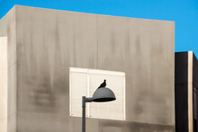 A Pigeon Perched On Top Of A Lamppost With A House Window Behind It.