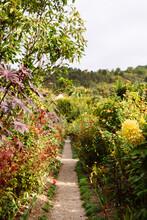 A Path Through The Flowers