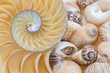 Sea Shell Collection, Close Up