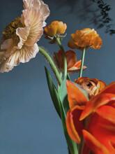Closeup Spring Orange Flowers On Grey Background