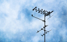 Birds Sitting On A Television Antenna