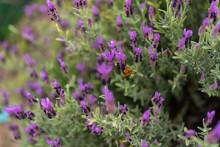 Bumblebee Pollinating Flowers