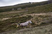 Horse Trotting Uphill
