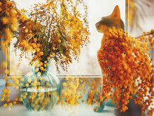 Still Life, Cat And Flowers.