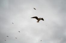 Flying Seabirds
