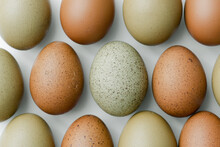 Brown And Olive Eggs Lined Up