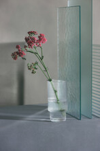 Flower Purple Butterfly Weed  In A Glass Near Plate Ribbed And Gloss Glass