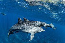Two Dolphins Basking In The Sun