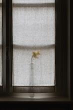 Minimalism With Flower In Vase