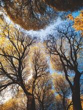 Landscape, Tree.