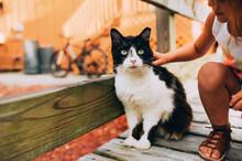 Stray Black And White Cat.