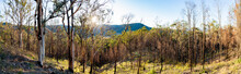 Panorama Of Hillside With Trees Growing Back After A Bushfire