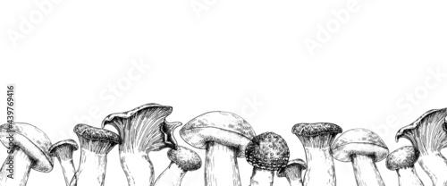 Fotografie, Obraz vector illustration, border with mushrooms