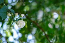 Fleurs Du Printemps Dans Un Jardin