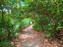 Magical Tunnel Of Trees At The Beach