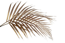Leaves Of Palm Gold Color Tree On White Background.clipping Path