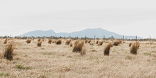 Grassy Tufts In A Rural Field With Misty Mountain Range On The Horizon