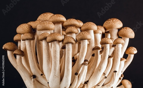 Fotografie, Obraz Clamshell mushrooms on a wooden background