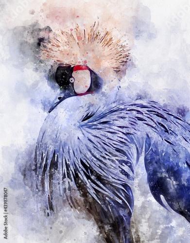 Fototapeta premium watercolour painting of Black crowned crane bird