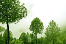 Beautiful View Of Tall Lush Green Trees In Rukum District, Nepal