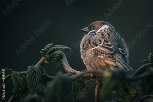 Fotografia Sparrow perched on a tree branch