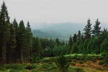 Coniferous Forest In Mountainous Terrain