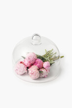 Glass Lid Over Pink Peonies