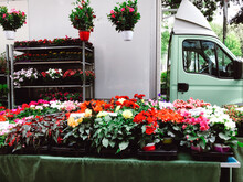 A Variety Of House Plant Flowers On A Market